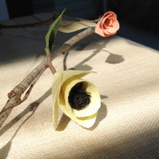 How To: DIY Paper Flowers